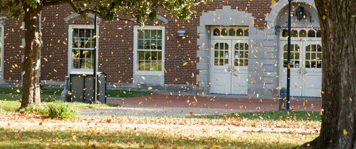leaves on campus